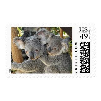 Koala Phascolarctos cinereus Queensland . Stamp