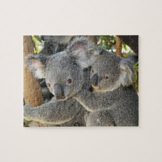Koala Phascolarctos cinereus Queensland . Jigsaw Puzzle