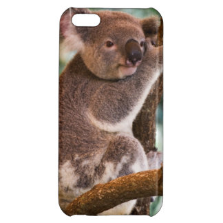 Koala Photo iPhone 5C Cover
