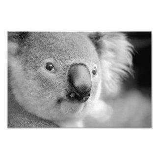 koala photo print