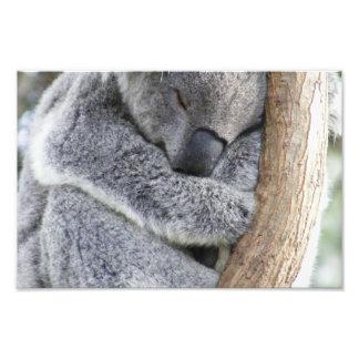 koala photo art