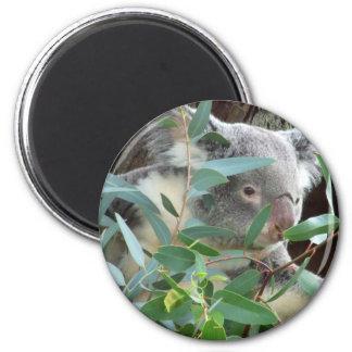 Koala Photography Magnet