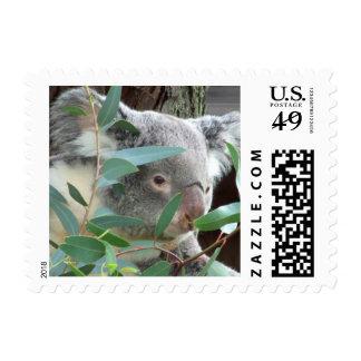 Koala Photography Postage Stamps (#2)