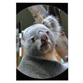 """Koala "" Pizarras Blancas"