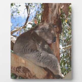 Koala Plaque