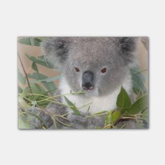 Koala Post-it® Notes