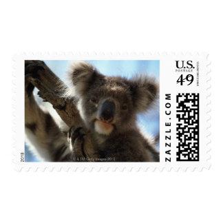 koala postage stamp