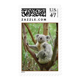 Koala Postage Stamps