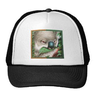 Koala que masca un gorra de la hoja
