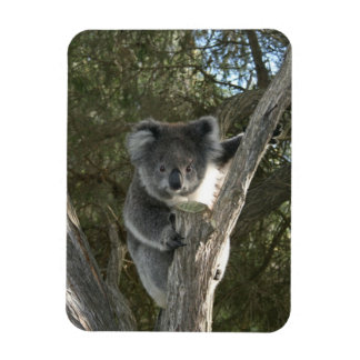 Koala Rectangular Photo Magnet