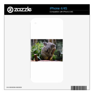 Koala Decals For The iPhone 4