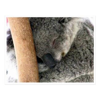koala sleep postcard