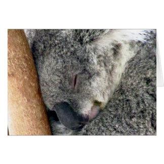 koala sleeps card