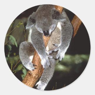 Koala soñolienta pegatina redonda