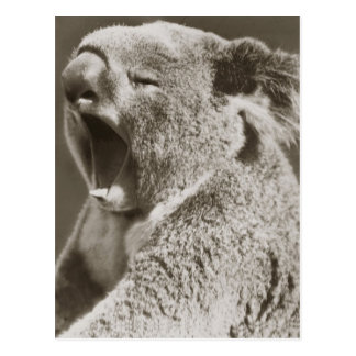 Koala soñolienta que bosteza postales