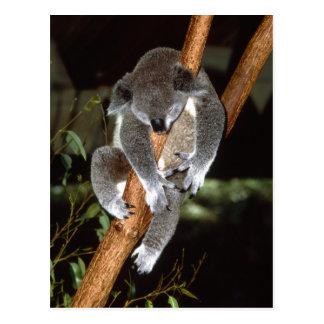 Koala soñolienta tarjeta postal