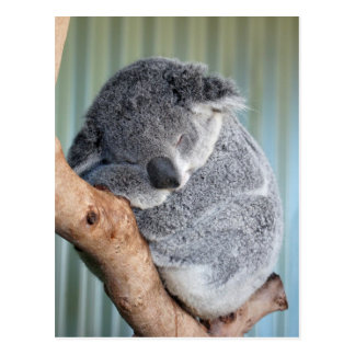 Koala soñolienta postal