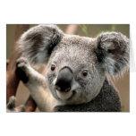Koala Stationery Note Card