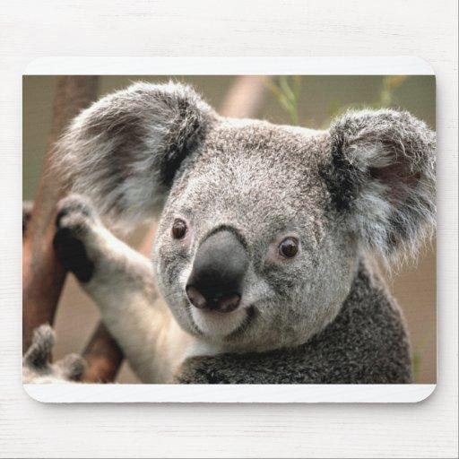 Koala Tapete De Raton