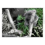 Koala Tarjeta