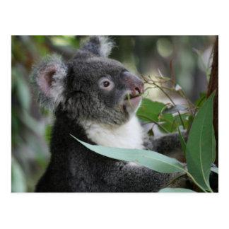 Koala Postal