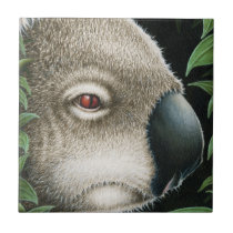 Koala Tile