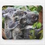 Koala tres en un árbol tapetes de ratón