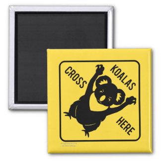 Koalas Cross Here Magnet