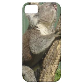 Koalas de Kuddly en Australia Funda Para iPhone SE/5/5s