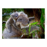 Koalas de la mamá y del bebé felicitacion