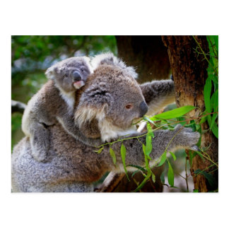 Koalas de la mamá y del bebé postal