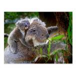 Koalas de la mamá y del bebé tarjetas postales