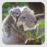 Koalas lindas pegatina cuadrada