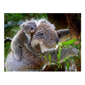 Koalas lindas postal