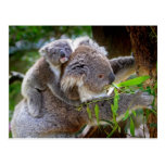 Koalas lindas postales