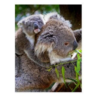 Koalas lindas tarjeta postal