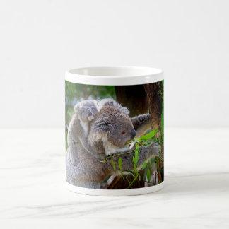 Koalas lindas taza mágica