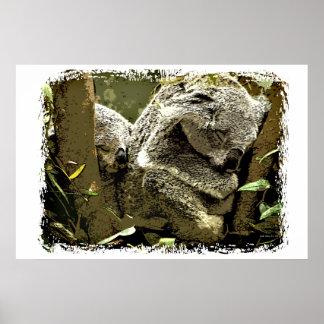 Koalas soñolientas posters