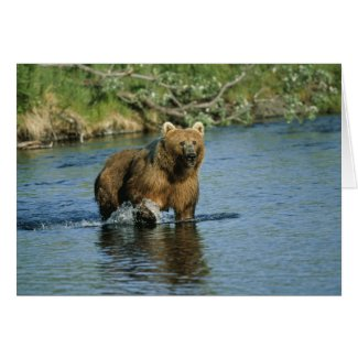 Kodiak Bear Card