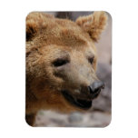 Kodiak Bear Magnet Rectangle Magnets