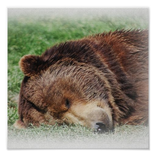 Kodiak Bear Sleeping Print