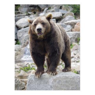 Kodiak Bear Standing on a Rock Postcard