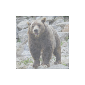 Kodiak Bear Standing on a Rock Stone Magnet