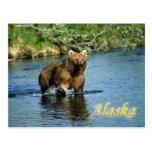 Kodiak brown bear, Alaska Post Card