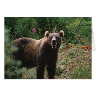 Kodiak Brown Bear Card