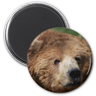 Kodiak Brown Bear Magnet