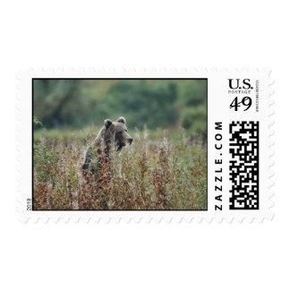 Kodiak brown bear postage