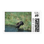 Kodiak brown bear stamp