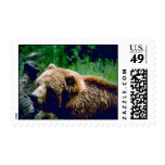 Kodiak Brown Bear Stamps