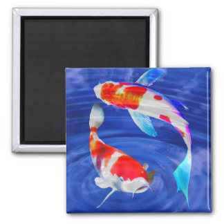 Kohaku Duo in Deep Blue Pond 2 Inch Square Magnet